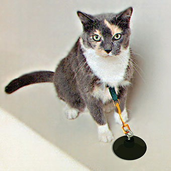 cat-suction-cup