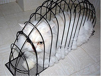 cat-in-a-cage