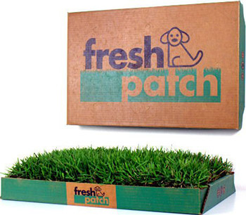 fresh-patch-real-grass-for-dogs
