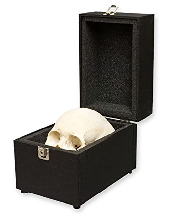 human-skull-with-carrying-case