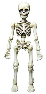 pose-skeleton