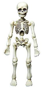 pose-skeleton