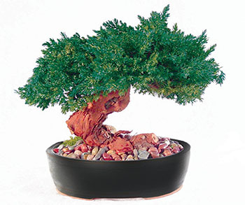 fake-bonsai-tree