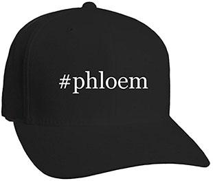 phloem-hat