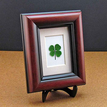 framed-four-leaf-clover