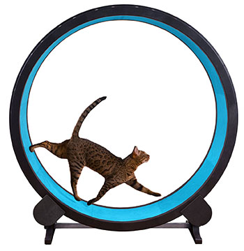 one-fast-cat-exercise-wheel